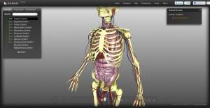 BioDigital Human Herzschlag